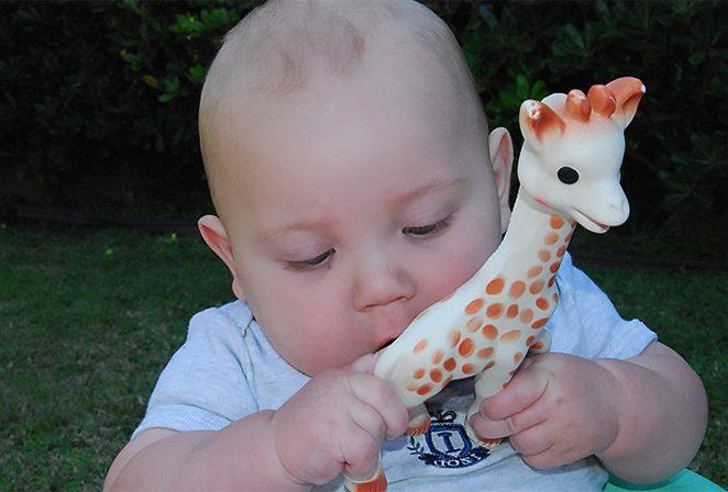 Le best seller Sophie la girafe se décline en produits dérivés
