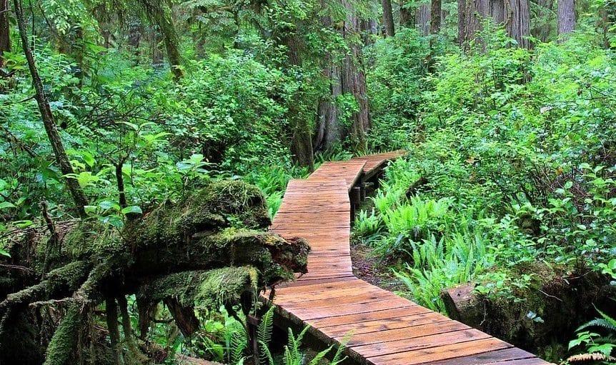 Écotourisme au Canada : 4 conseils pour préparer votre voyage insolite